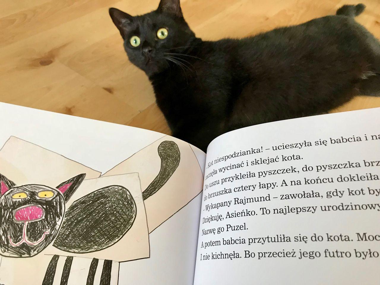 Kocie czytanki