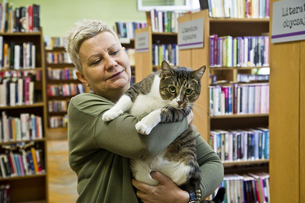 Kot Pimpek – ambasador bezdomnych zwierząt i twarz Biblioteki Elbląskiej