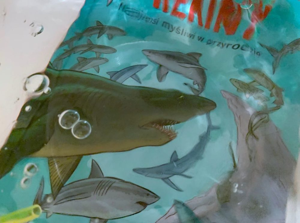 Rekiny i książkowi pożeracze
